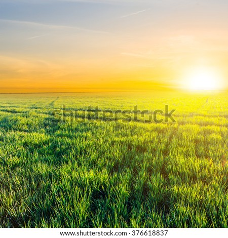 sunset over a green rural fields - stock photo
