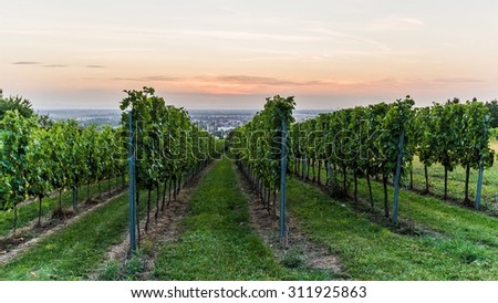 Sunset over a winery in southern Germany - stock photo