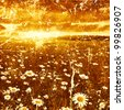 Sunset over daisy field in retro and grunge style. - stock photo