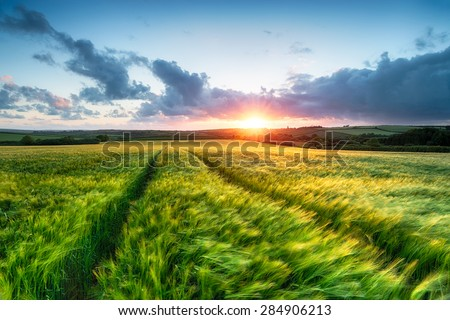 Sunset over farm land with barley blowing in the breeze - stock photo