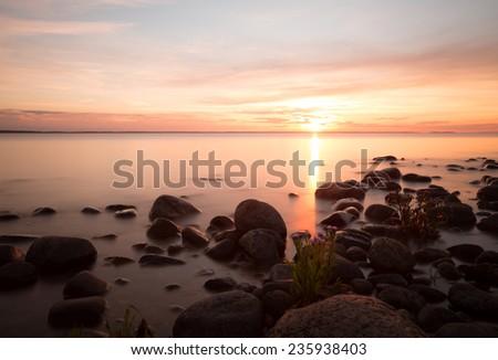 Sunset over the baltic sea, coastline of Ã?Â?land, Sea aster, Tripolium vulgare blooming at the shoreline  - stock photo