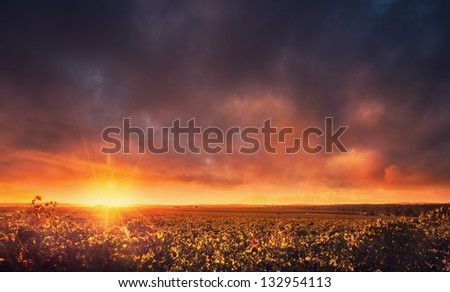 Sunset over the Barossa Valley, South Australia - stock photo