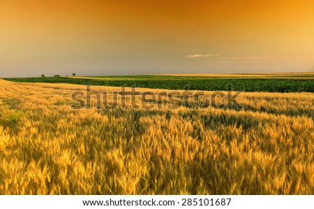sunset over wheat field - stock photo