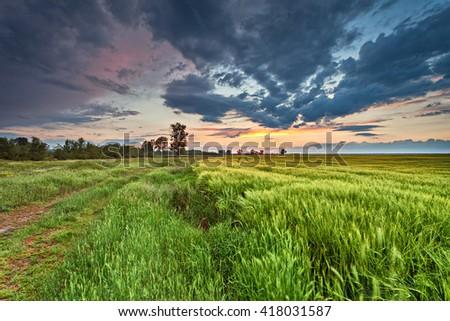Sunset over wheat field, Landscape  - stock photo