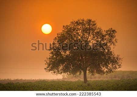 Sunset scene with lonely tree - stock photo