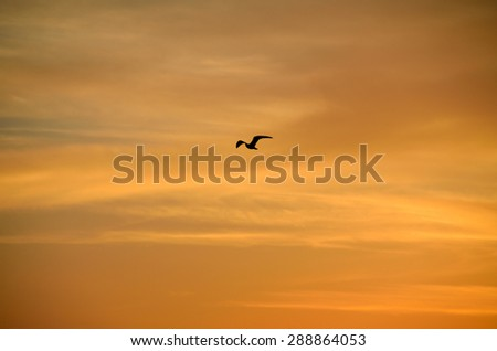 Sunset sky with one bird in flight - stock photo