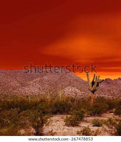 Sunset Sonora desert in central Arizona USA - stock photo