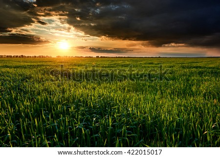 sunset, summer landscape, bright colorful sky and clouds as background, green field and trees - stock photo