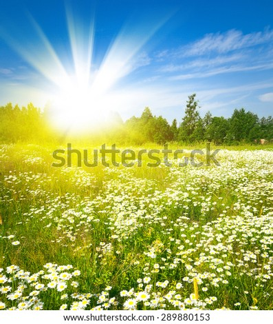 Sunset sun and field of green fresh grass under blue sky - stock photo