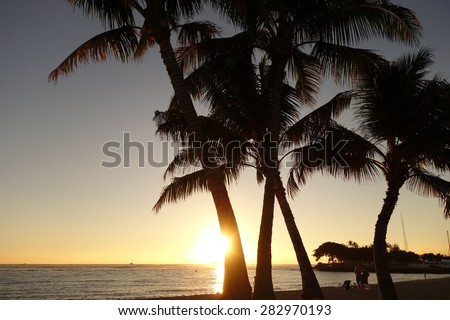 Sunset through coconut trees over the ocean at Ala Moana Beach Park on Oahu, Hawaii. - stock photo