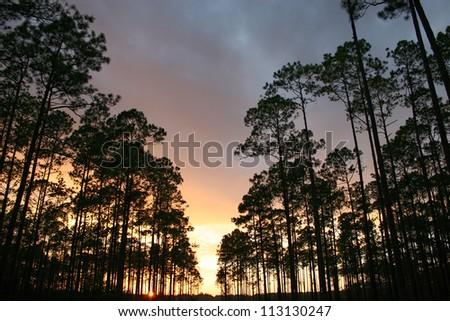 sunset through trees - stock photo
