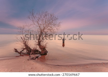 Sunset time. Lonely tree on empty coastline. Man, standing waist-deep in the water near the shore at the beach, - stock photo
