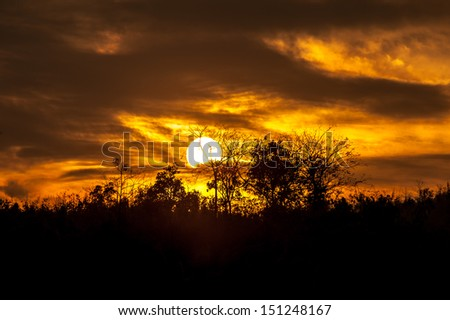 sunset view of jungle - stock photo