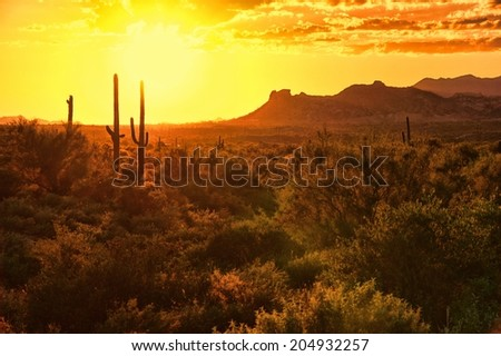 Sunset view of the Arizona desert with cacti and mountains - stock photo