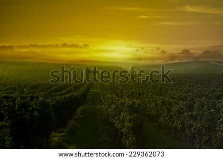 Sunset-Wineyard-Bordeaux Wineyard-France - stock photo