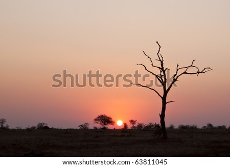 Sunset with dead tree in Africa - stock photo