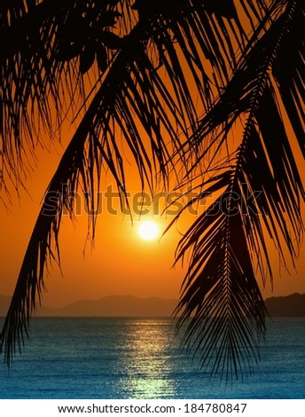 Sunset with palm leaves on beautiful Amdaman sea in Krabi. Thailand. - stock photo