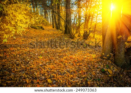 sunset with sun  in autumn forest instagram stile  - stock photo
