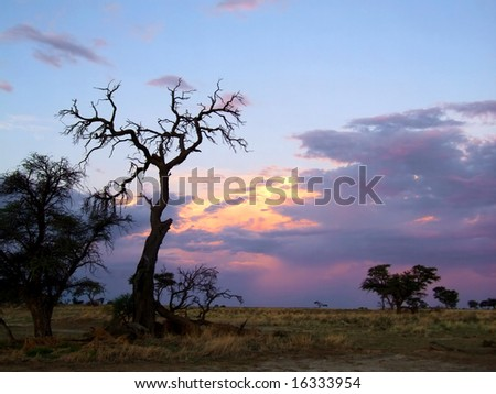 Sunset with trees and storm clouds, Kalahari desert, South Africa - stock photo