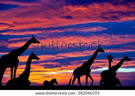 sunset zebra and giraffes resting in the grass on fota wildlife park in county cork ireland - stock photo