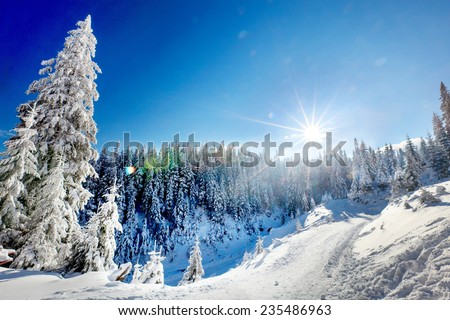 Sunshine, bright day with white snow reflecting - stock photo