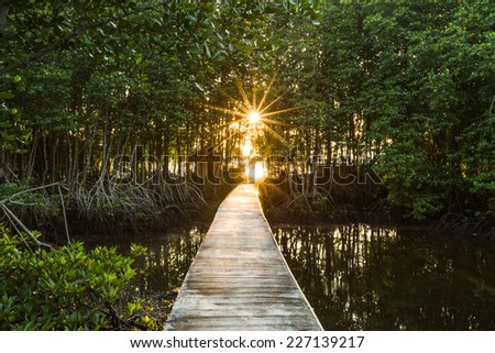 Sunshine in Early Morning at Mangrove Forest - stock photo