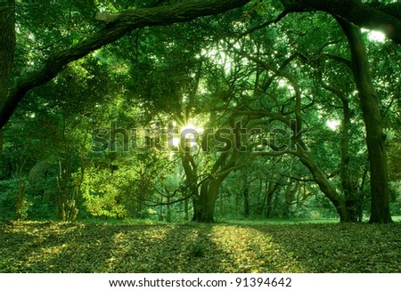 sunshine in the forest 1 - stock photo