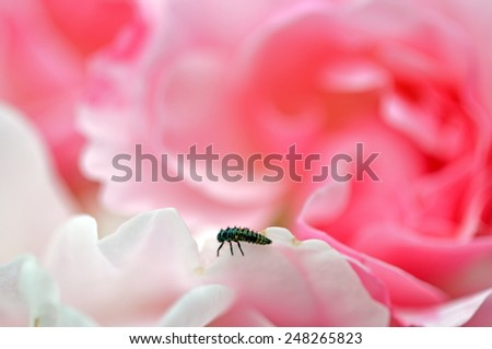 super macro shot of flower for beautiful background - stock photo