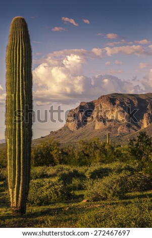 Superstition Mountains shown with a Saguaro Cactus near Phoenix Arizona as the sun is setting photographed from Silly Mountain State Park. - stock photo