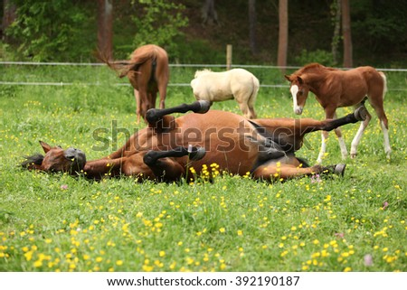Suprised foal looking at roll around mare on pasturage - stock photo