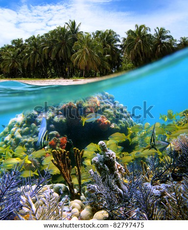 Surface and underwater view of a tropical beach with coconut trees and corals with shoal of fish, Caribbean sea, Zapatillas islands, Panama - stock photo