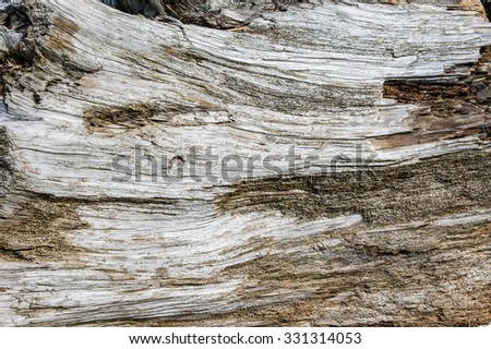 Surface of a large piece of weathered driftwood - stock photo