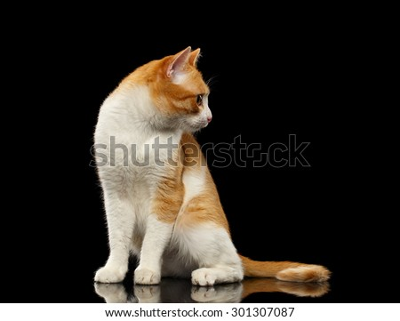 Surprised Ginger Cat Sits on Black Mirror and Looking at Right background  - stock photo