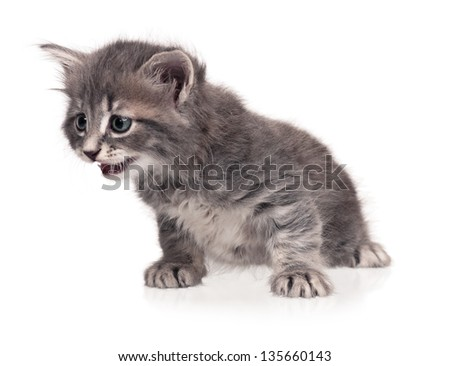 Surprised little kitten isolated on white background cutout - stock photo