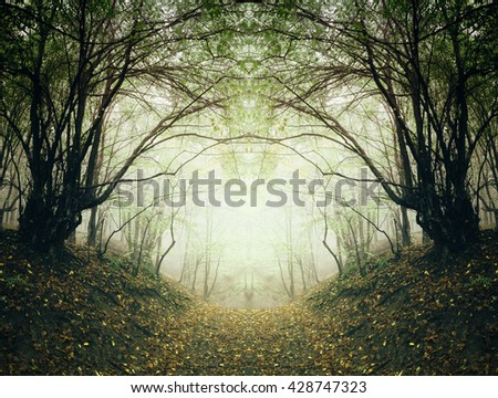 surreal forest path - stock photo