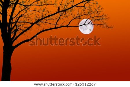 Surreal looking silhouette of a leafless tree and moon against a sunset sky. Plenty of copy space. - stock photo