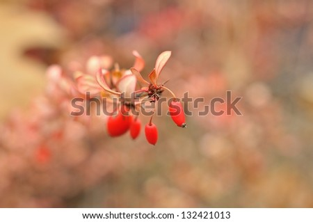 Surreal nature background - Orange-pink autumn shrubs with berries and  motley artistic bokeh blur. - stock photo