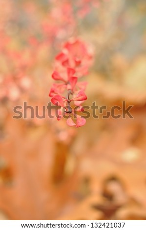 Surreal nature background - yellow-pink autumn shrubs with motley artistic bokeh blur. - stock photo