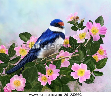 Swallow on a branch of a blossoming rose hips - stock photo