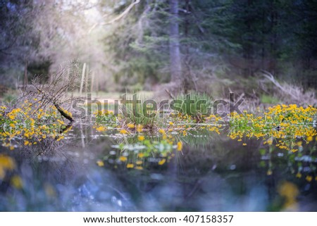 swamp in forest with sun highlight and marsh marigold flowers - stock photo