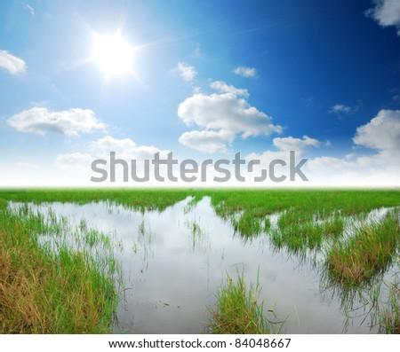 swamp rice field background blue sky landscape - stock photo