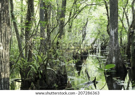 Swamp view with cypress stumps. Picture taken at Six Mile Cypress Slough Preserve, Fort Myers-FL, USA. - stock photo