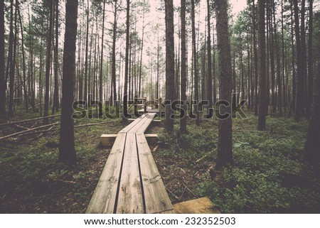 swamp view with lakes and footpath. Vintage effect. - stock photo