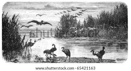 "Swampland in Florida. Illustration originally published in Hesse-Wartegg's ""Nord Amerika"", swedish edition published in 1880. - stock photo"