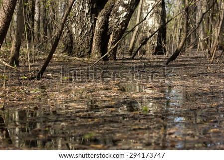Swampy forest. Landscape - stock photo