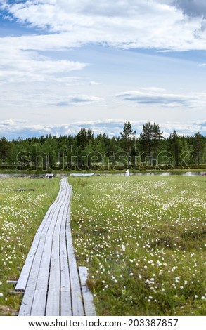 Swampy river bank and wooden planks to water - stock photo