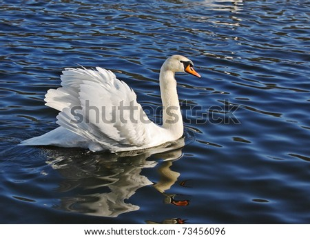 Swan on a pond - stock photo