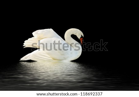 Swan on the black surface. - stock photo