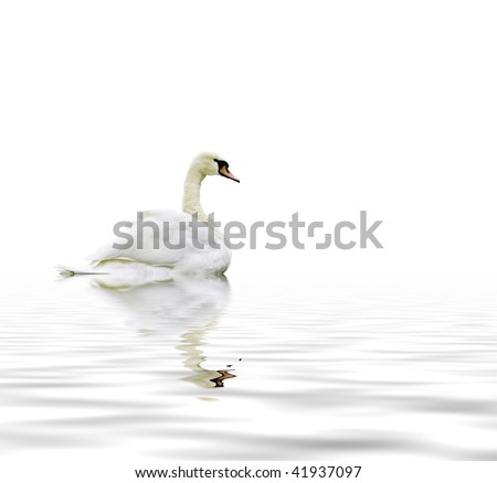 Swan reflection - stock photo