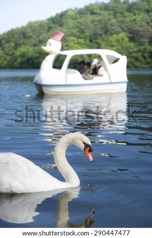 Swan swimming in lake - stock photo